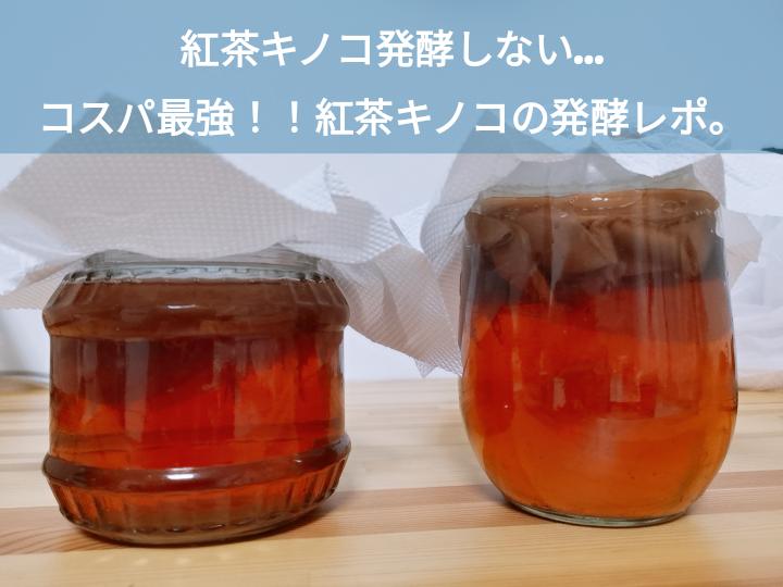 紅茶キノコ発酵しない。紅茶キノコの発酵レポ。反省点まとめ。